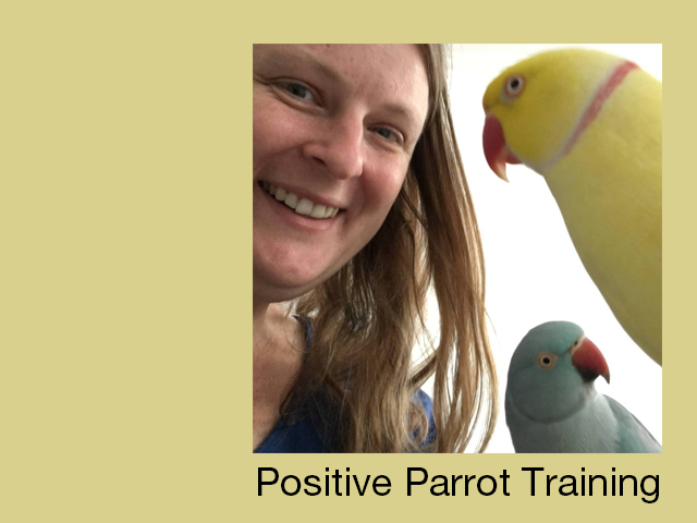 Positive reinforcement parrot training